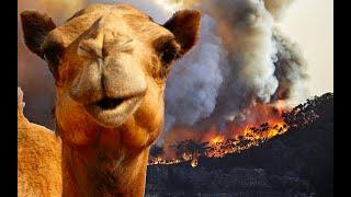Avustralya Yangını  Sadece Avustralya da Bulunan İnanılmaz Hayvanlar