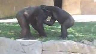 Gorilla Smackdown