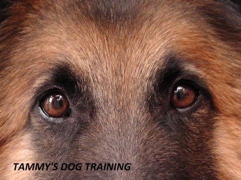 ban-shock-collars---a-plea-from-tammy-of-www.tammysdogtraining.co.uk