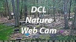 DCL Web Cam (03/25/2020)