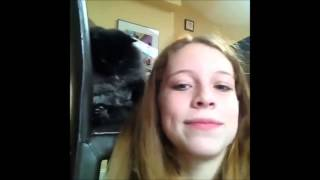 Смешное видео про кошек бесплатно #6
