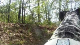 Singletrack Trail Dog- Running Dalmatian-go Pro Hd
