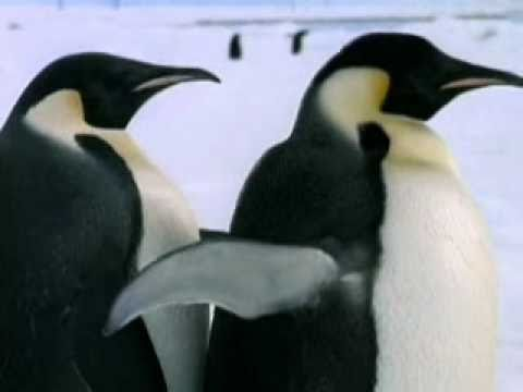 Discovery Channel: Thermoregulation in Animals