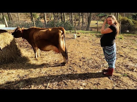 A Day In The Life Of Homesteaders