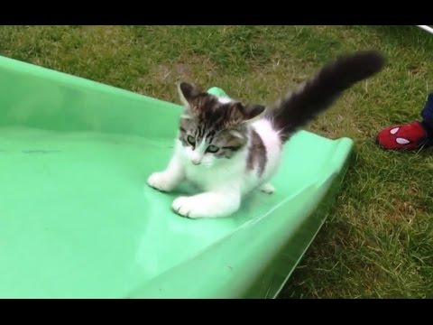 Cats on Slides Compilation