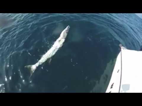 Boca Grande Fishing Charters Reviews _ (239) 719-2355