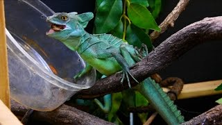 what is a basilisk?