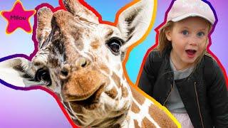 Меня забодал Жираф? Что случилось на экскурсии в Паттайе