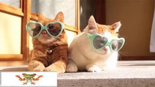 Новая лучшая подборка смешных видео роликов с нашими любимцами (кошки и собаки)
