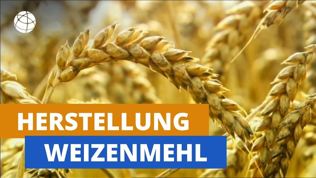 Download Wie wird aus Weizen Mehl? | Planet Schule