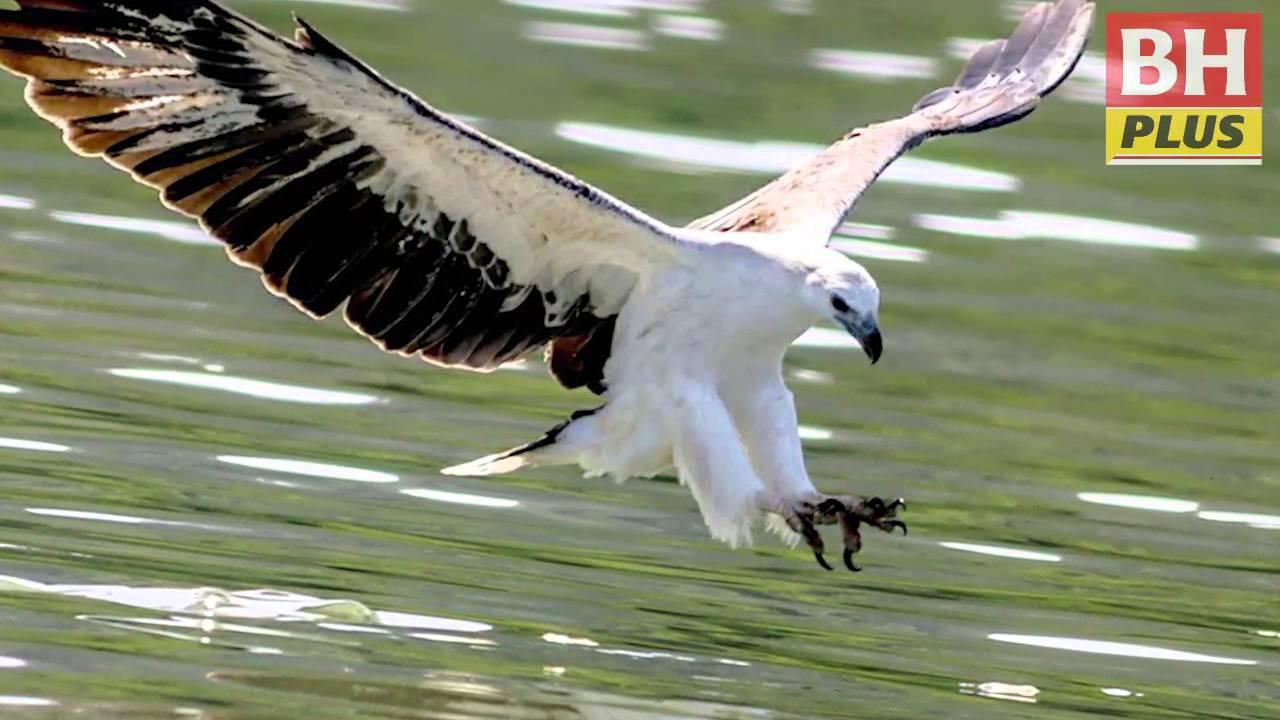 Pemburu gambar burung - YouTube