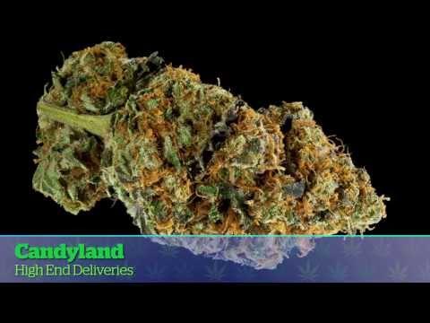 LA Medical Cannabis Cup 2014: Sativa Entries
