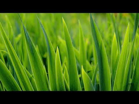 Как происходит образование органических веществ в зеленых растениях