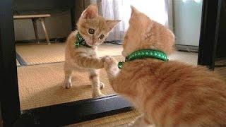 แมวและสุนัขเทียบกับกระจก - ตลกและรวบรวมสัตว์น่ารัก