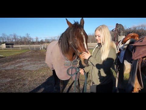 That Time I Went Horseback Riding | Arm Workout