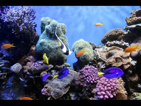 ocean sea under animals geographic national