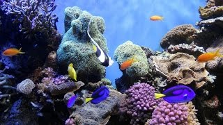 National Geographic - Ocean Animals Life Under the Sea - Widlife animals