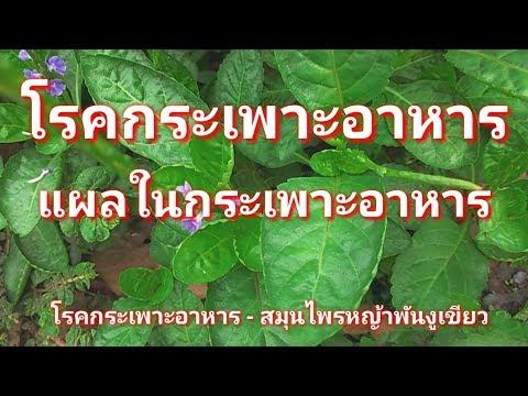 สมุนไพรแก้โรคกระเพาะอาหาร แผลในกระเพาะอาหาร(สมุนไพรหญ้าพันงูเขียว)