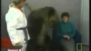 Crazy bear attack women!!.3gp