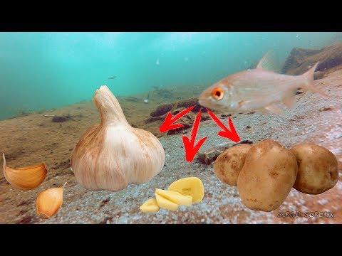 РЕАКЦИЯ РЫБЫ НА ЧЕСНОК, ОБЫЧНУЮ КАРТОШКУ, ЛЕТНЮЮ ПРИКОРМКУ И СУХАРИ Подводная съемка