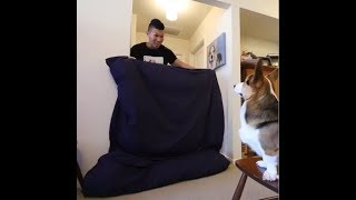 What The Fluff Challenge Compilation - Dog's Amazing Reaction To Magic Trick