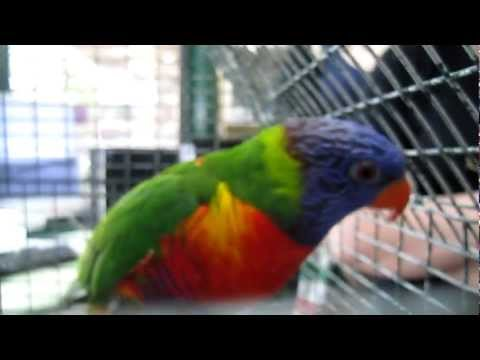 Image Result For Parrot Talking Training App