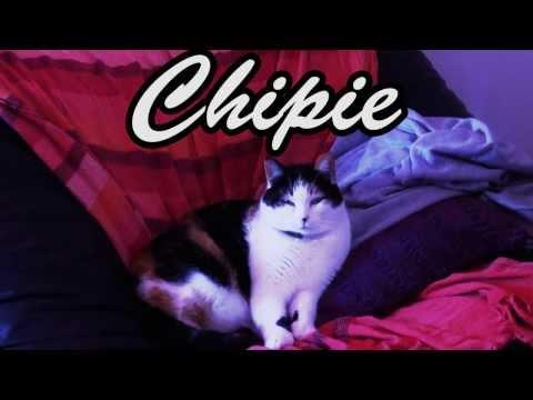 Clever Attitude # 1 - Comment Vas-tu Chipiechi ?   Cat / Chat Reaction To Dance