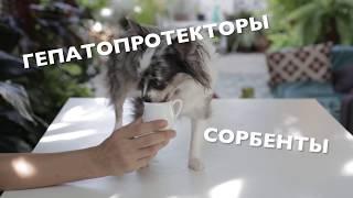 Схема выведения глистов у собаки в домашних условиях(Как вывести глистов у собаки дома? Мы предлагаем рабочую схему, которую сами повторяем постоянно для профил..., 2015-07-05T08:30:00.000Z)