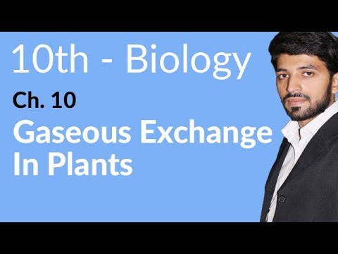 Gaseous Exchange in Plants - Biology Chapter 10 Gaseous Exchange biology - 10th Class