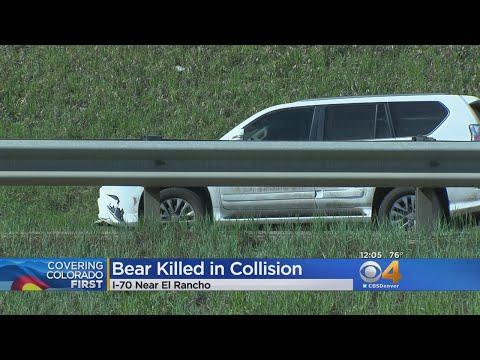 SUV Hits, Kills Bear On I-70