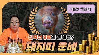 [백련사]신축년 양력 9월 돼지띠 운세!!