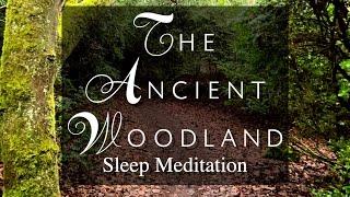 Guided sleep meditation - The Ancient Woodland