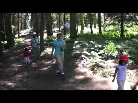 Sequoia-Kings Canyon - 2009