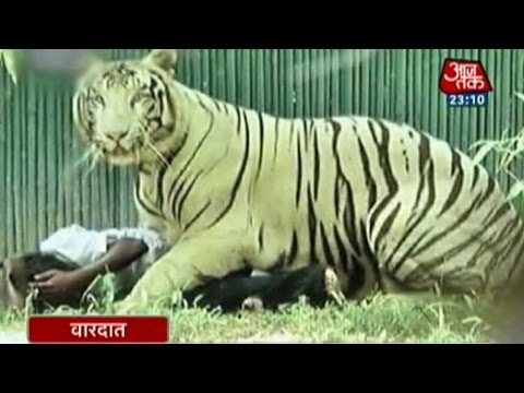 Vardaat: When the white tiger got provoked in 2.25 minutes (PT-1)