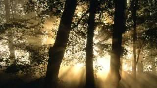Robert Fox - Into the Light