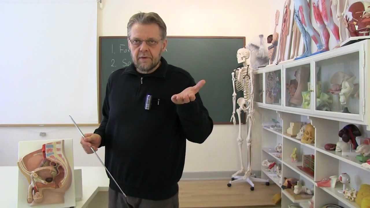 Anatomi-skolen - Introduktion til kønsorganernes anatomi hos manden.mpg