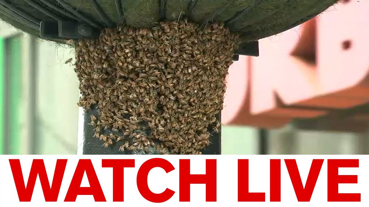 Bees swarm planter outside Urban Outfitters store
