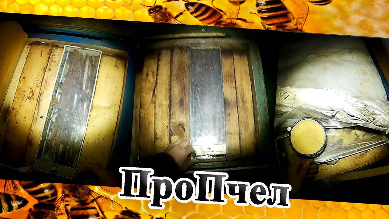 Как дать пчелам белковую подкормку в улей (не лепёшка) - YouTube