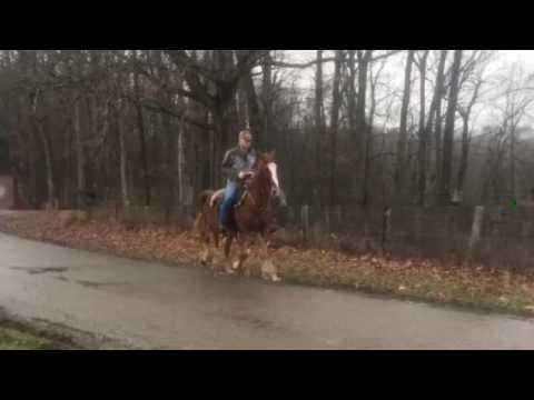 Hy Society Ritz Mare for Sale