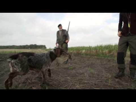 Min Alsidige Jagt Og Familiehund Youtube