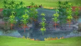 20. Нецветковые растения. Часть 1