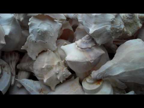 Douglas Jones Fish Art Gallery Tybee Island GA.wmv