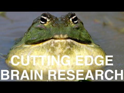 Cutting edge Brain Research - Harvard researcher Nouchine Hadjikhani