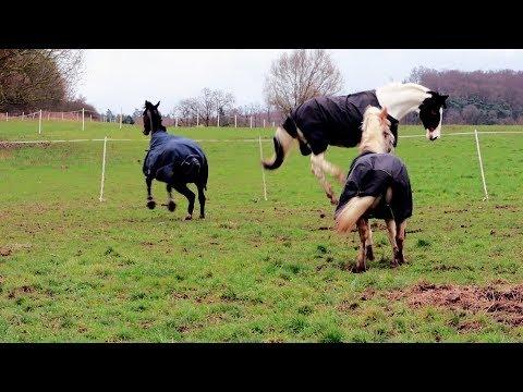 Wilde Pferde - Die Jungs kommen auf die Winterkoppel und geben so richtig Gas | Cubilox Vlogs