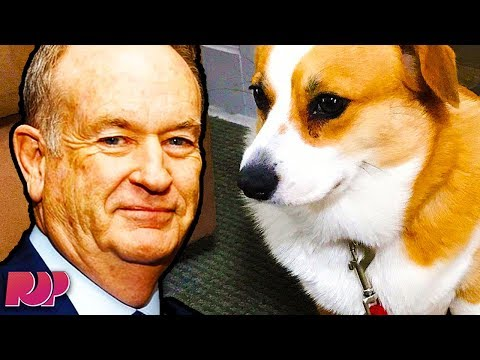 Bill O'Reilly Brought His Innocent Corgi Into NFL Kneeling Debate
