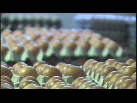 Green Tech Egg Industries Pte Ltd and Henritex Malaysia Sdn Bhd Hens Egg Production Company Profile