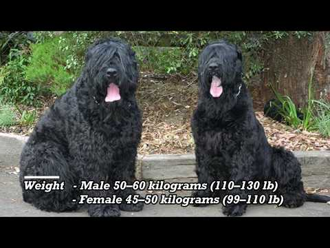 Giant Dog Breed Part 01