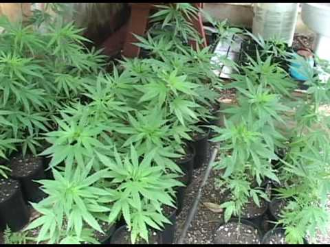 Governor sends legislation legalizing recreational marijuana to legislature