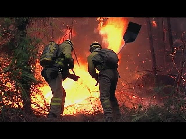 Deadly forest fires sweep across Portugal and  northern Spain