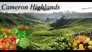 Cameron Highland Holiday - Organised By Sengkang CC